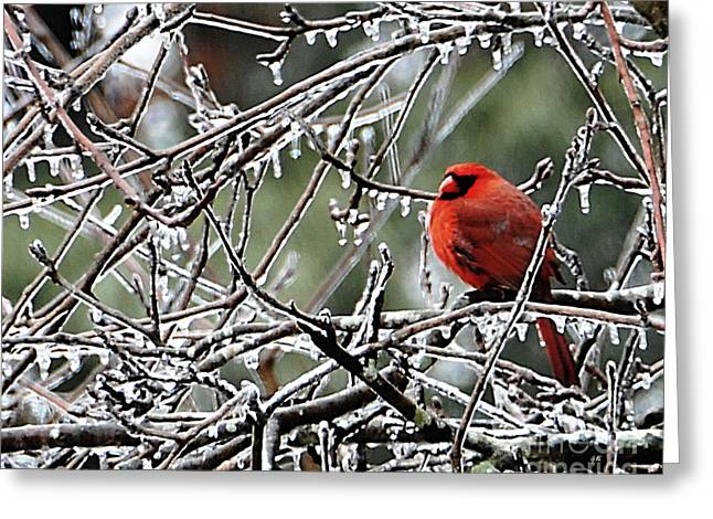Fine_art Greeting Cards - It Is So Cold Greeting Card by Gerlinde Keating - Keating Associates Inc