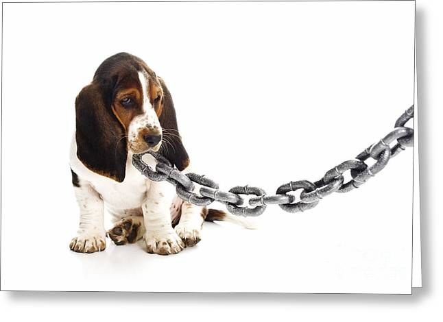 Basset Hound Greeting Cards Greeting Cards - It Was Not That Big Greeting Card by Jan Tyler