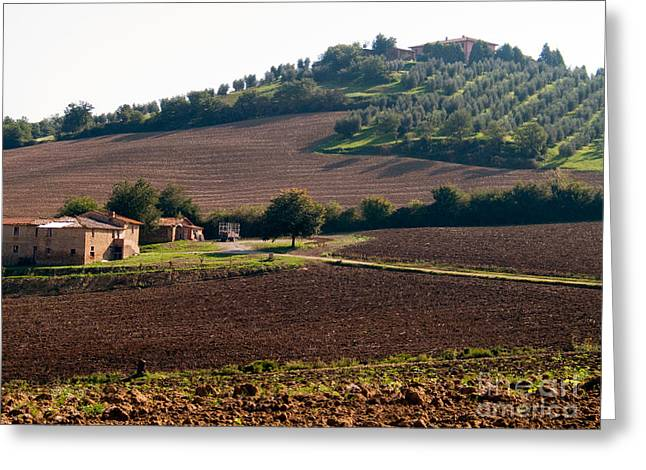 (olea Europaea) Greeting Cards - Italian Countryside Greeting Card by Tim Holt