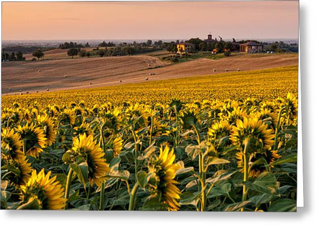 Italian Sunset Greeting Cards - Italian sunfowers Greeting Card by Francesco Ferrarini