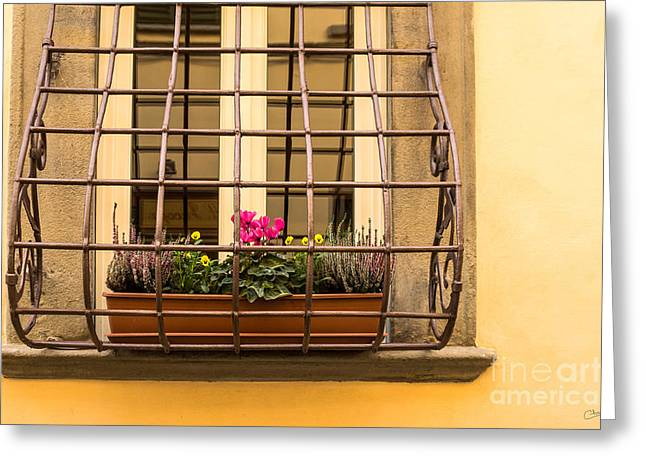 Charly Greeting Cards - Italian Window Box Greeting Card by Prints of Italy