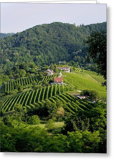 Italian Wine Prosecco Greeting Card by Salvatore Gabrielli