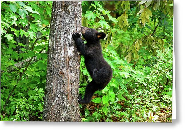 American Brown Bear Greeting Cards - Itchy Baby Greeting Card by Christi Kraft