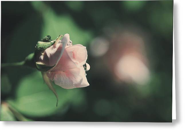 Dew Drop Greeting Cards - Itll Be Alright Greeting Card by Laurie Search