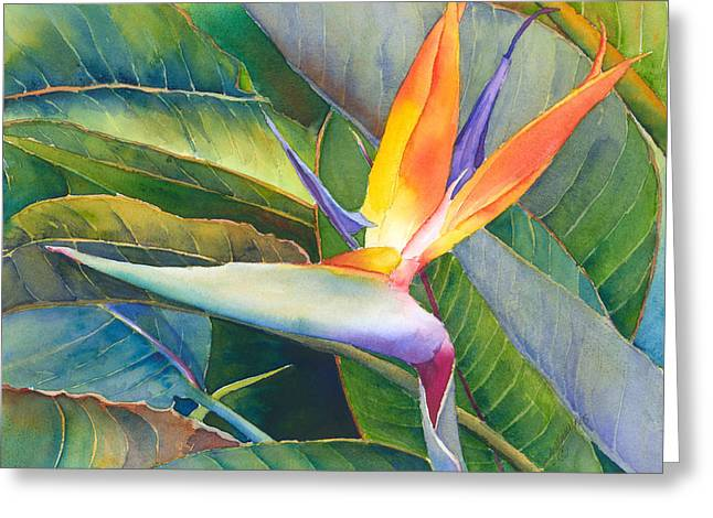 Bird Of Paradise Greeting Cards - Its a Bird Greeting Card by Judy Mercer
