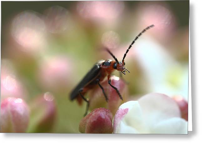 Flying Insect Greeting Cards - Its A Bugs World Greeting Card by Michael Eingle