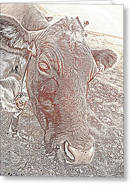 Sweating Greeting Cards - Its a cows life  Greeting Card by Hilde Widerberg