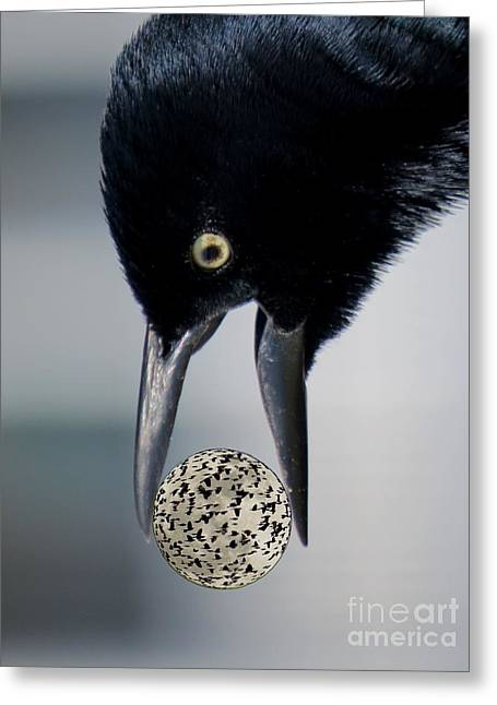 Spheroid Greeting Cards - Its a Crazy World of Blackbirds Greeting Card by Scott Cameron