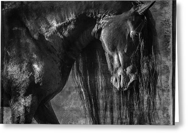 The Horse Greeting Cards - The Mane Thing D2849 Greeting Card by Wes and Dotty Weber