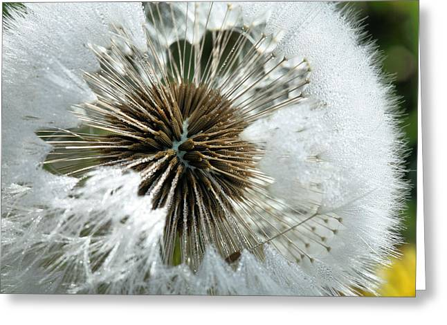 Dandilion Greeting Cards - Its a Small World Greeting Card by JC Findley