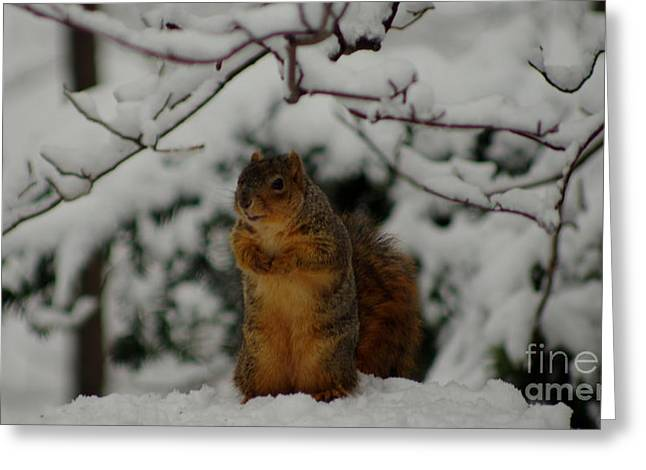 Fox Squirrel Greeting Cards - Its Cold Outside Greeting Card by Kitrina Arbuckle