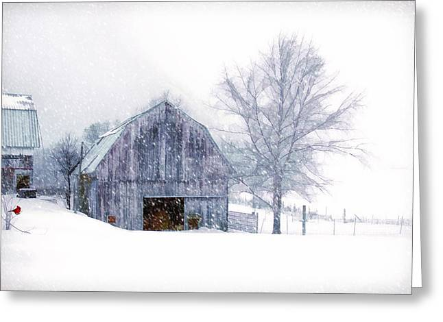 It's Cold Outside Greeting Card by Mary Timman