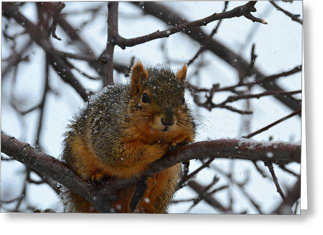 Fox Squirrel Greeting Cards - Its Cold said The Squirrel Greeting Card by Rae Ann  M Garrett