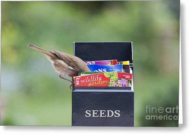 Feeding Birds Photographs Greeting Cards - Its in here somewhere Greeting Card by Tim Gainey