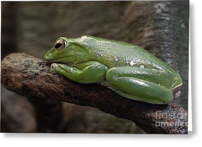 It's Not Easy Being Green Greeting Card by Barbara McMahon