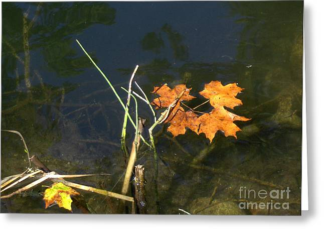 It's Over - Leafs On Pond Greeting Card by Brenda Brown