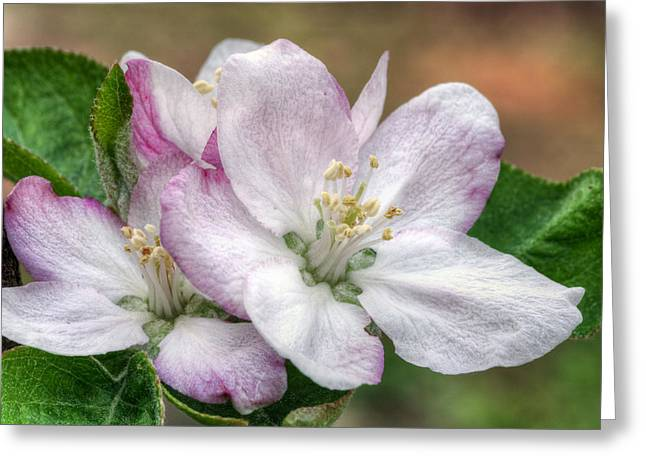 Fauquier County Greeting Cards - Its That Time Greeting Card by JC Findley