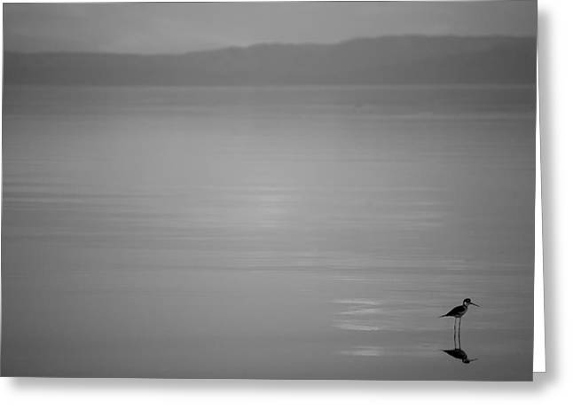 Desert Lake Greeting Cards - Its the Little Things - Black and White Greeting Card by Peter Tellone