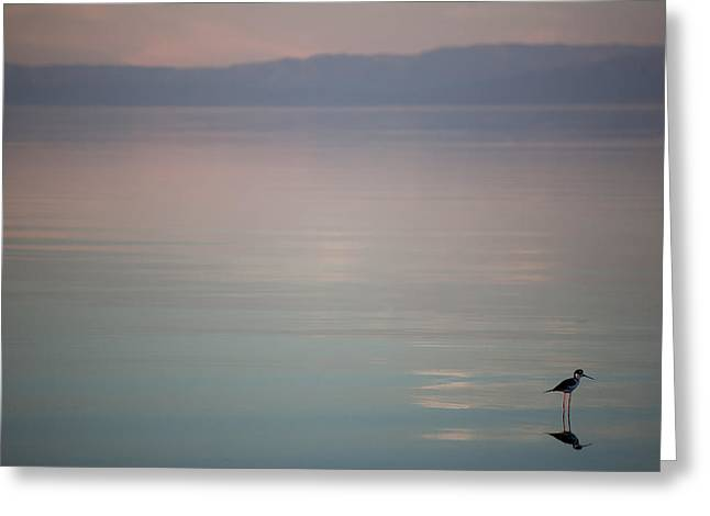 Salton Sea Greeting Cards - Its the Little Things Greeting Card by Peter Tellone