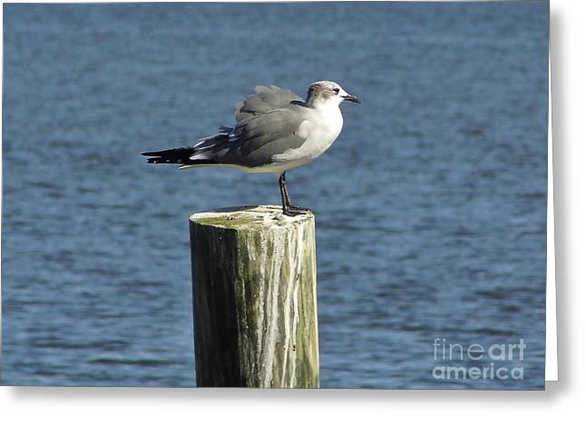 Cedar Key Greeting Cards - Its Windy Out Here Greeting Card by D Hackett