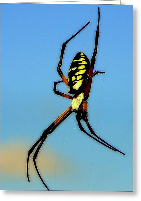 Big Spider Greeting Cards - Itsy Bitsy Spider Greeting Card by Karen Wiles