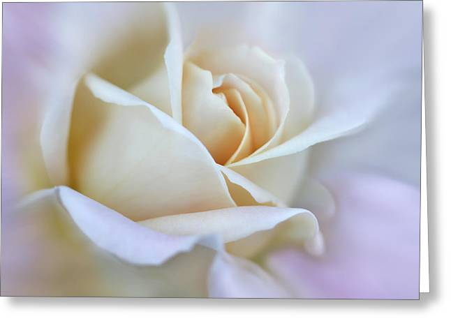 Ivory Roses Greeting Cards - Ivory and Pink Abstract Rose Flower Greeting Card by Jennie Marie Schell