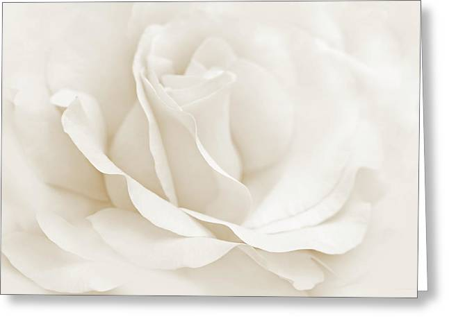 Ivory Roses Greeting Cards - Ivory Ballerina Rose Flower Greeting Card by Jennie Marie Schell
