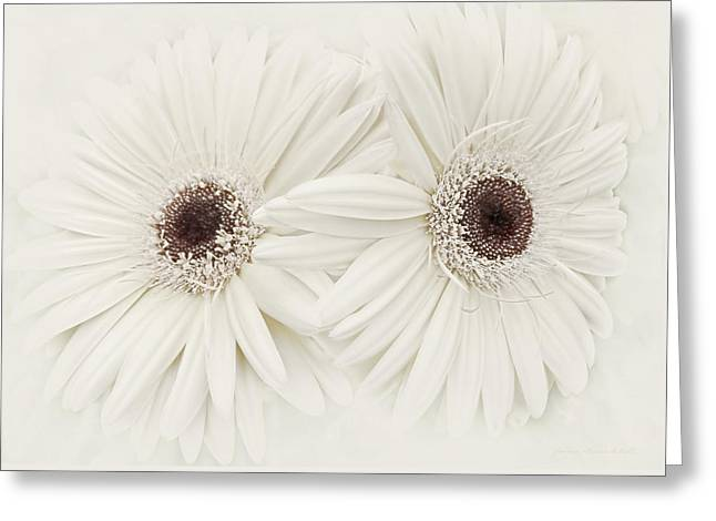 Ivory Gerber Daisy Flowers Greeting Card by Jennie Marie Schell
