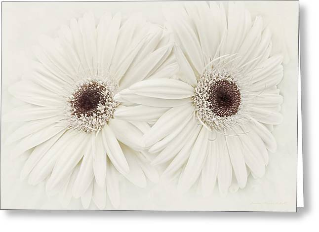 Light Taupe Greeting Cards - Ivory Gerber Daisy Flowers Greeting Card by Jennie Marie Schell