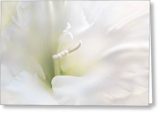 Stamen Greeting Cards - Ivory Gladiola Flower Greeting Card by Jennie Marie Schell