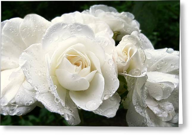 Ivory Roses Greeting Cards - Ivory Rose Bouquet Greeting Card by Jennie Marie Schell