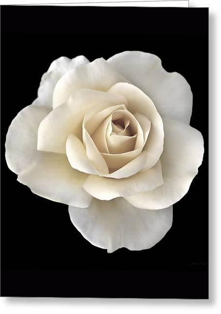 Ivory Rose Flower Portrait Greeting Card by Jennie Marie Schell