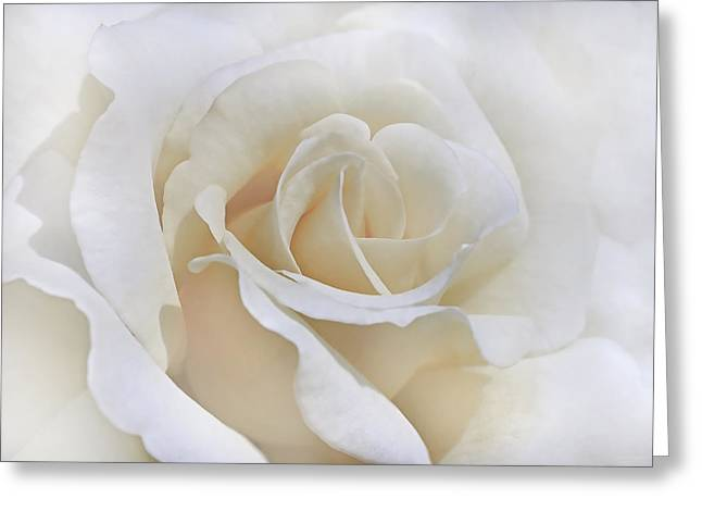 Ivory Roses Greeting Cards - Ivory Rose in the Clouds Greeting Card by Jennie Marie Schell