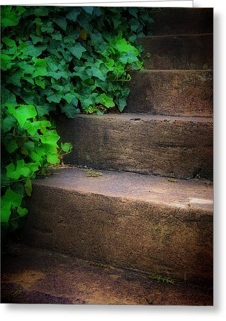 Stepping Stones Greeting Cards - Ivy Beside Steps Greeting Card by Steve Hurt
