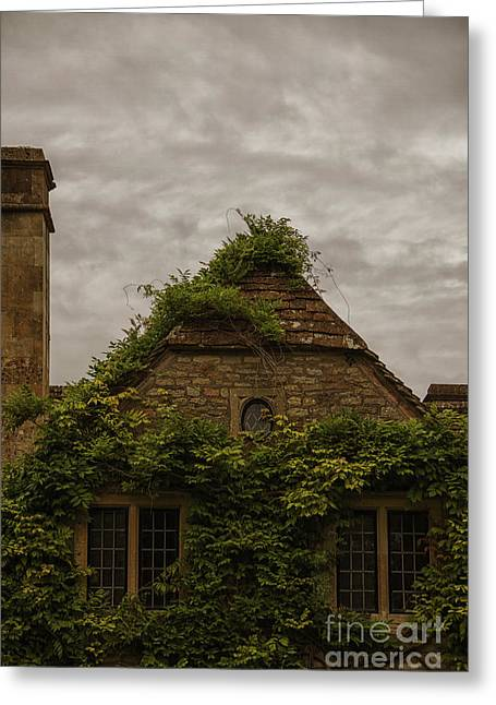 Roof Covering Greeting Cards - Ivy Covered Greeting Card by Margie Hurwich