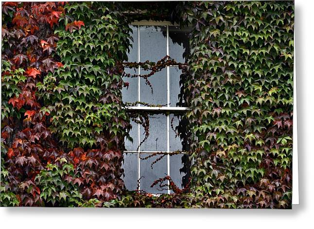 Outlook Greeting Cards - Ivy Covered Window Greeting Card by Henry Kowalski