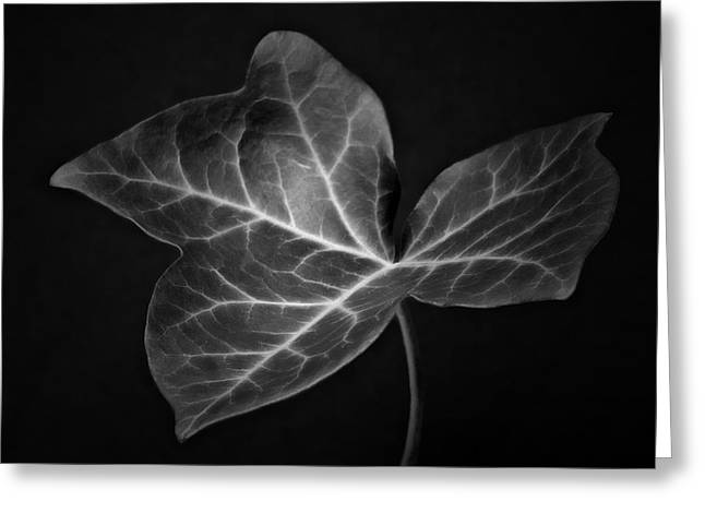 Black And White Flowers Macro Photography Art Work Greeting Card by Artecco Fine Art Photography