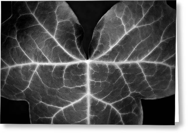 Close Up Framed Prints Greeting Cards - Black And White Flowers Macro Photography Art Work Greeting Card by Artecco Fine Art Photography