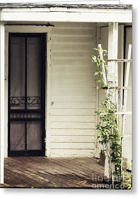 Screen Door Greeting Cards - Ivy on Trellis Greeting Card by Margie Hurwich