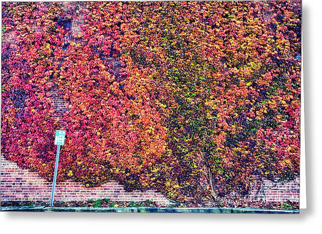 Photographers Greensboro Greeting Cards - Ivy Rainbow Greeting Card by Dan Carmichael