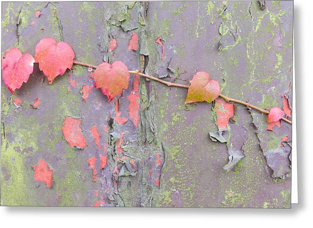 Lobes Greeting Cards - Ivy vs Paint Greeting Card by Semmick Photo