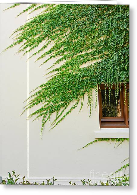 Green Foliage Greeting Cards - Ivy - Window covered by creeping ivy. Greeting Card by Jamie Pham