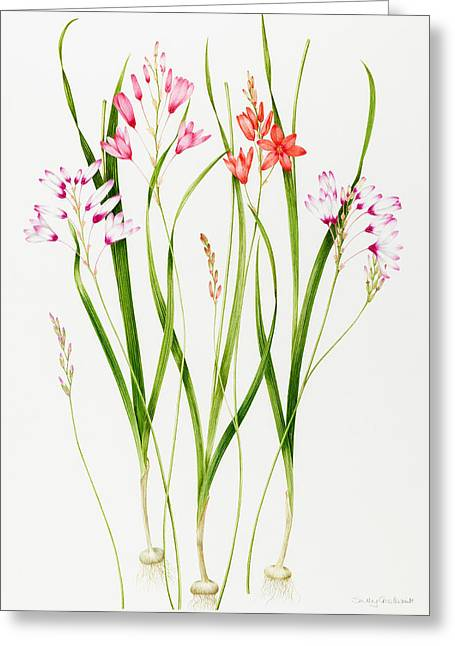 Tasteful Art Greeting Cards - Ixia  Greeting Card by Sally Crosthwaite