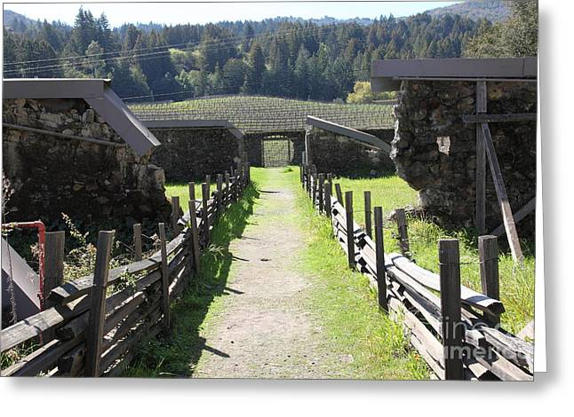 Pastoral Vineyards Greeting Cards - Jack London Ranch Winery Ruins 5D22180 Greeting Card by Wingsdomain Art and Photography