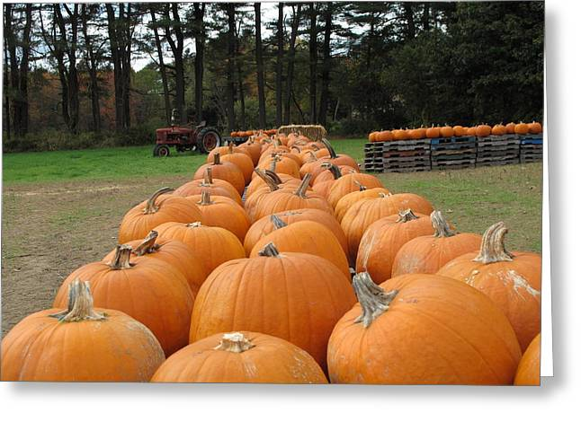 Best Sellers -  - Farm Stand Greeting Cards - Jack O Lanterns in Waiting Greeting Card by Barbara McDevitt