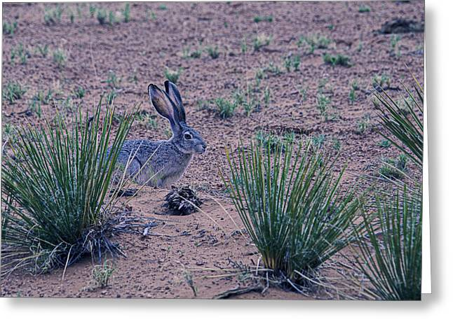 Hare Photographs Greeting Cards - Jack Rabbit Greeting Card by Garry Gay