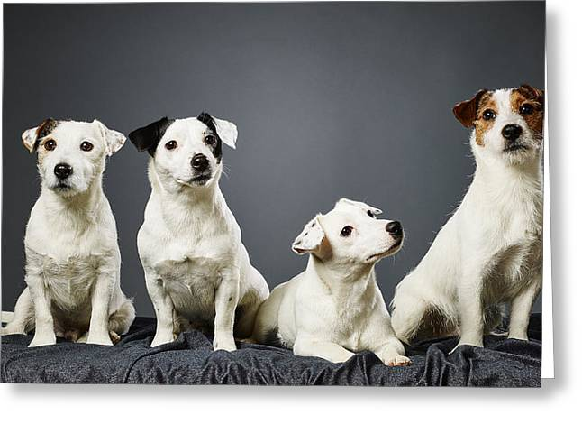 Four Animal Faces Greeting Cards - Jack Russell terrier family portrait Greeting Card by Jari Hindstroem