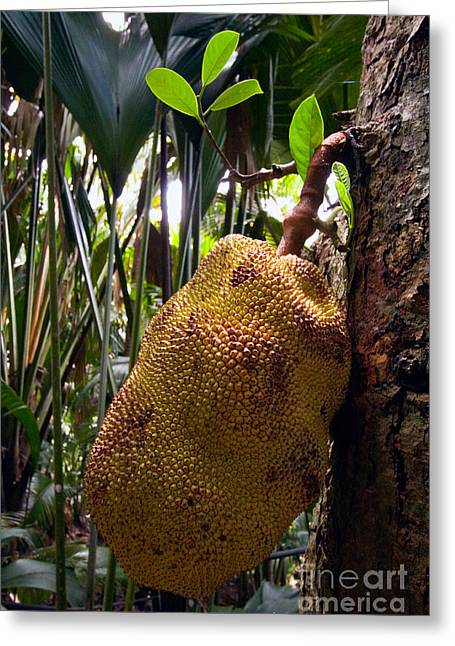 Jackfruit Greeting Cards - Jackfruit Greeting Card by Tim Holt