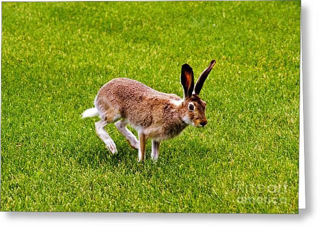 Jack Rabbit Greeting Cards - Jackrabbit Greeting Card by Charline Xia