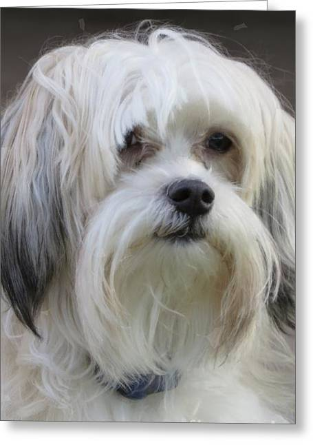 Recently Sold -  - Puppies Digital Greeting Cards - Jacks Bad Hair Day Greeting Card by Ella Kaye Dickey